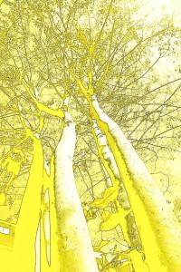 1 yellow tree